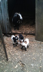 Smudge & the Triplets